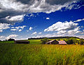 Flickr - Nicholas T - Grassy (2).jpg