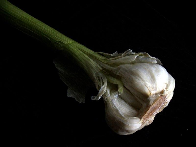 Flickr - cyclonebill - Hvidl%C3%B8g.jpg