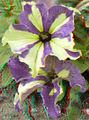 Flickr - jimf0390 - JimF 06-05-12 0014a flowers at Latham.jpg