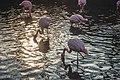Flock of Flamingos (Unsplash).jpg