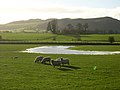 Flooding, Sheep and Hightown Hill - geograph.org.uk - 289477.jpg