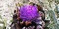 Flor de Carxofera IMG 20190626 175701.jpg