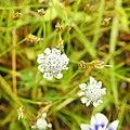 Flora from Madayipara DSCN2622.jpg