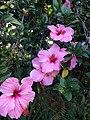 Flores Jardim Publico.JPG