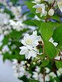 Flower-center131036.jpg
