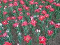 Flower-center140813.jpg