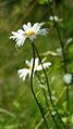 Flower (8079745574).jpg