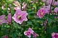 Flower 214 (35350198055).jpg