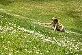 Flower among flowers Flor entre Flores (4761279458).jpg