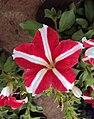Flowers - Uncategorised Garden plants 110.JPG