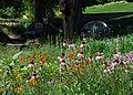 Flowers Field (39584766).jpeg