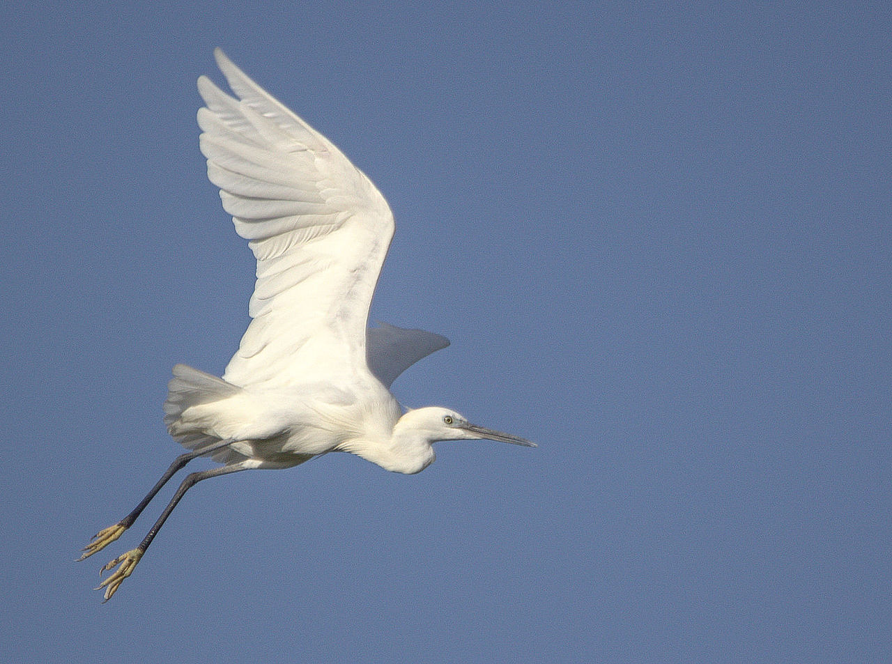 white heron question View notes - white heron essay from buad 1305 at sam houston state university an analysis of a white heron sarah orne jewetts short story, a white heron centers on a few days in the life of sylvia ask a homework question-tutors are online.