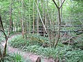 Footbridge in the Woods - geograph.org.uk - 189275.jpg