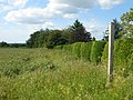 Footpath to Long Melford - geograph.org.uk - 186699.jpg