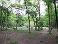 Forêt de Buzet 2014-05-08T13-56-46.jpg