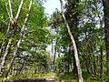 Forêt de Liorac Saint-Sauveur près le Dougnou (1).JPG