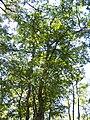 Forêt de la Coubre 021.jpg