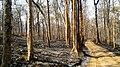 Forest Fire @ Wayanad Wildlife Sanctuary, Muthanga Range - panoramio (14).jpg
