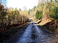 Forestry road, Wyre Forest - geograph.org.uk - 1623227.jpg