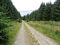 Forestry road in Stonedge Forest - geograph.org.uk - 540203.jpg