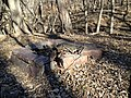 Forgotten Campsite on the Tip of the Second toe - panoramio.jpg