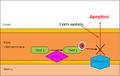 Fosforilació TRAP1.png
