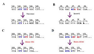Frameshift mutation - Different types of indel mutation. Panel C is simply a deletion and not a frameshift mutation.