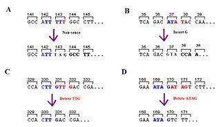 Frameshift mutation Mutation that shifts codon alignment