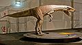 Frenguellisaurus ischigualastensis p2.jpg