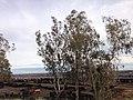 Fresno, CA, USA - panoramio (34).jpg