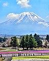 Fuji Shibasakura festival 19 April 2016 (20^ bloom) - panoramio.jpg