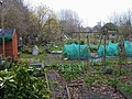 Fulham Palace Meadow allotments - geograph.org.uk - 1088492.jpg