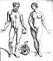 Full-length male and female nudes, T. Geminus, 1545 Wellcome L0018087.jpg