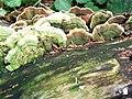 Fungi (3616411677).jpg