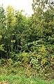 Garden-abandoned-20-years-8.jpg