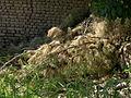 Garden Way - Wall - trees - streamlet - 17 Shahrivar st - Nishapur 39.JPG