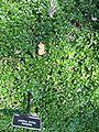 Gardenology.org-IMG 0671 hunt07mar.jpg