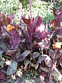 Gardenology.org-IMG 1114 rbgs10dec.jpg