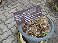 Gardenology.org-IMG 7788 qsbg11mar.jpg