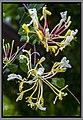 Gardens by the Marina Bay-97 (8352790182).jpg