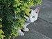 Gato callejero en Madrid 15.jpg