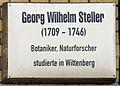 Gedenktafel Schlossstr 3 (Wittenberg) Georg Wilhelm Steller.jpg