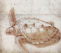 Gelderland1601-1603 Caretta caretta.jpg