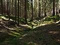 Gelobtbachtal, údolí Klopotského potoka - panoramio (1).jpg