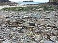 Gesteinsmix am Porthlysgi Beach.jpg