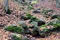 Gfp-wisconsin-blue-mound-state-park-rocks-on-the-streambed.jpg