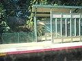 Glen Head LIRR; Mineola-bound Platform Shelter.jpg