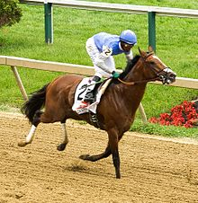 Goldencents Wikipedia