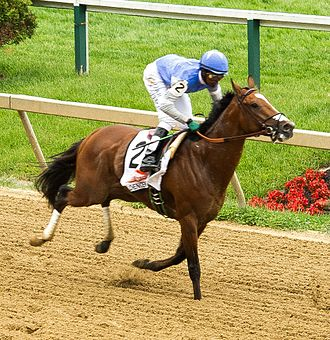 Goldencents - Goldencents at the 2013 Preakness Stakes