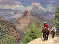 Grand Canyon National Park, Bright Angel Trial, Mule Trip 4825 - Flickr - Grand Canyon NPS.jpg